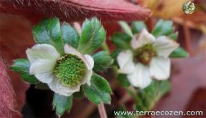 fresas_enero2