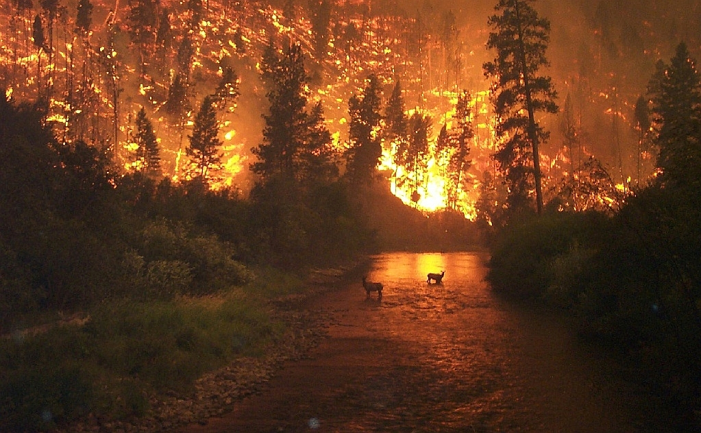 """Elk Bath"" – A wildfire in the Bitterroot National Forest in Montana, United States"